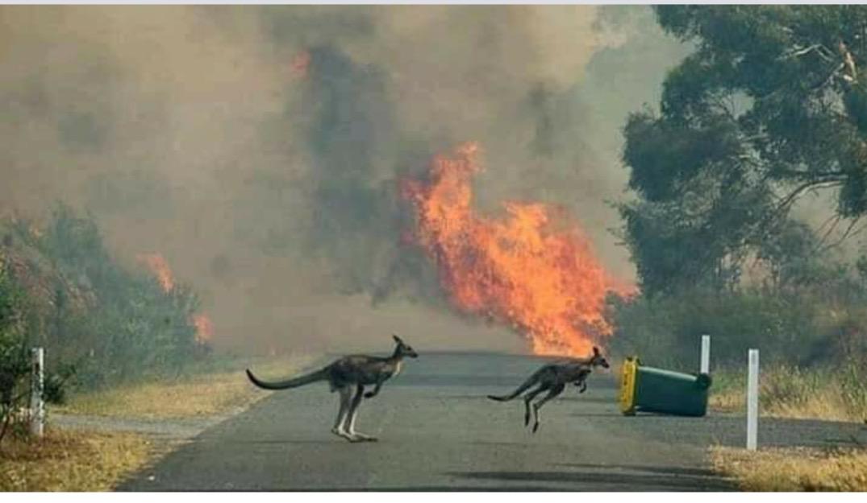 El humo de los incendios de Australia ya afecta en la mitad de toda la Tierra